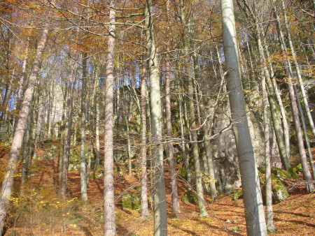 Foto Coaching-Themen Herbstwald