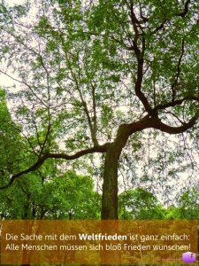 Foto: Baum bringt Weltfrieden