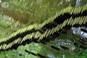 Foto Fluss, Gewässerschutz, Grün