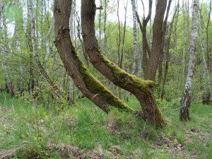 Foto 2 Bäume und Wald