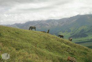 Foto Pferde auf der Weide