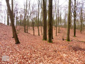 Foto Buchenwald im Winter